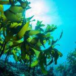 Tảo biển – thành phần siêu làm đẹp từ đại dương
